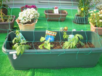 屋上庭園1