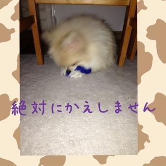 fc2blog_20131128175120bdd.jpg
