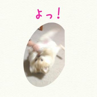 fc2blog_20131216171319a66.jpg