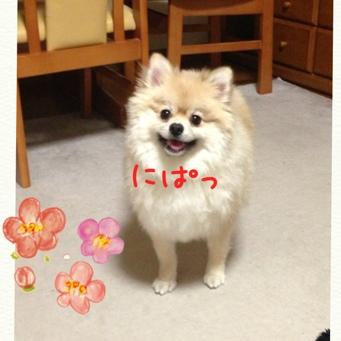 fc2blog_201312302210390ff.jpg