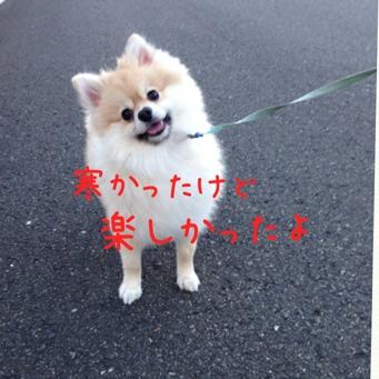 fc2blog_20140109185119bbb.jpg