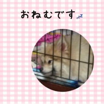 fc2blog_20140112210546a97.jpg