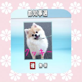 fc2blog_20140122181801e71.jpg