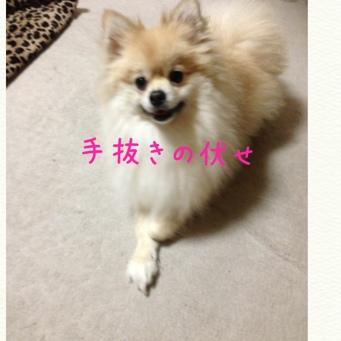 fc2blog_20140211215435922.jpg