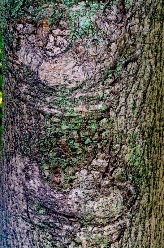 20121227-IMGP9426.jpg
