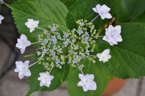 120615flower01.jpg