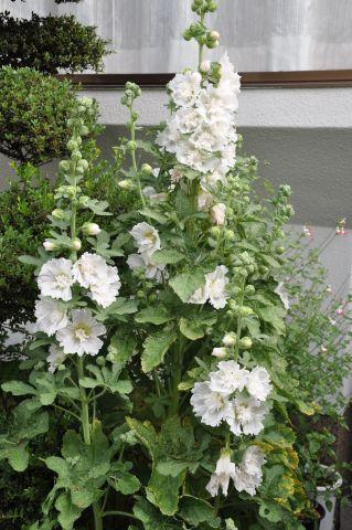 120615flower03.jpg