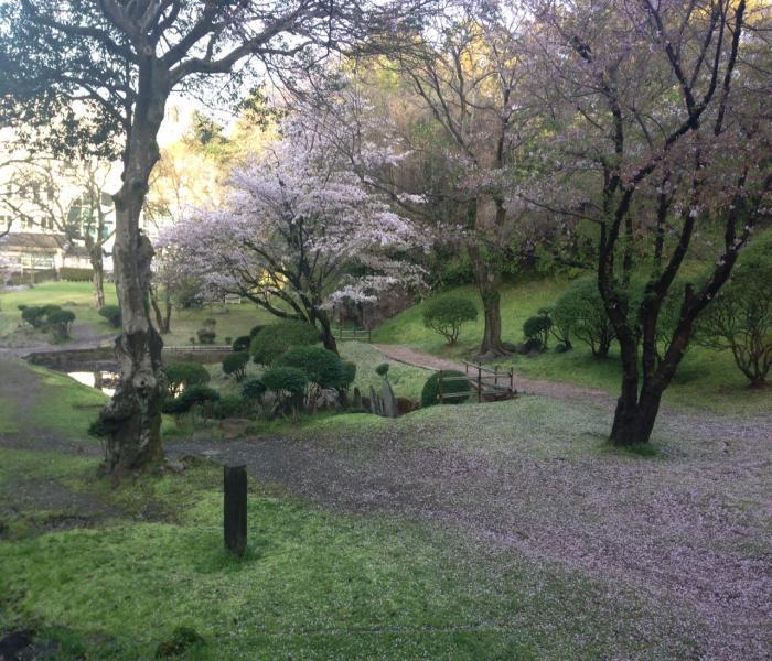 桜絨毯縮小