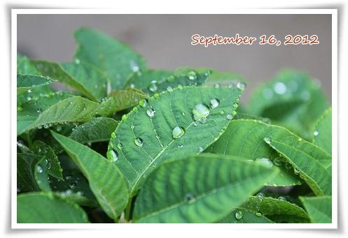 連休2日目も・・・ やっぱり雨だよー・・・・・(-_-;)