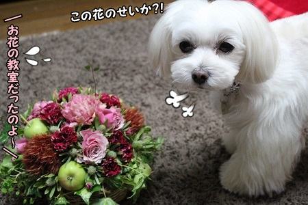 最近、花を抜きます・・・ 人間っぽくなってる?!