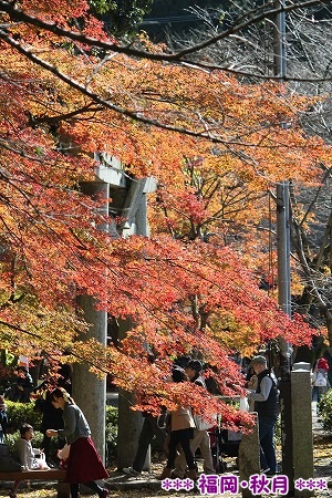 筑前の小京都・秋月