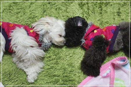 オデコとオデコがコッツンコ♪ 仲良くシンメトリー睡眠★