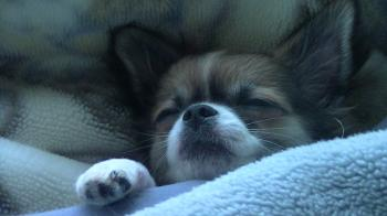 hayate_sleep.jpg