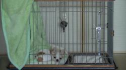 sakura_20121027.jpg
