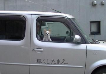 sakura_car2.jpg