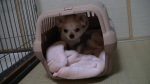 sakura_newbag2.jpg