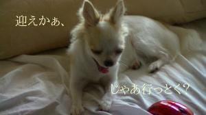 sakura_omukae2.jpg