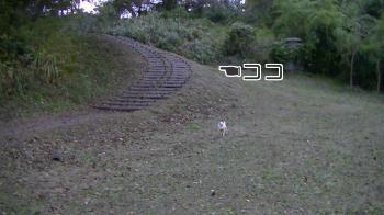 sakura_park9.jpg