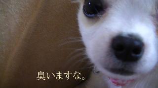 sakura_play2.jpg