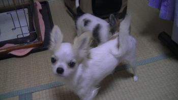 sakura_pri.jpg