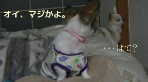 sakura_princess5.jpg