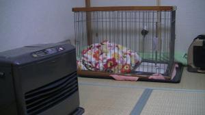 sakura_see.jpg