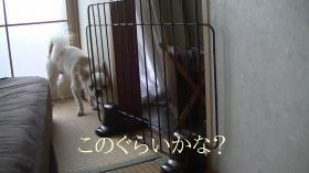 sakura_smart10.jpg