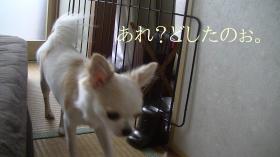 sakura_smart13.jpg