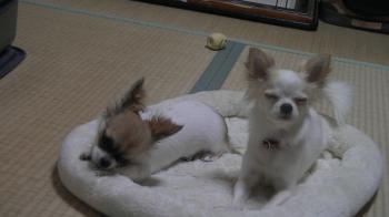 sakurahayate_first7.jpg