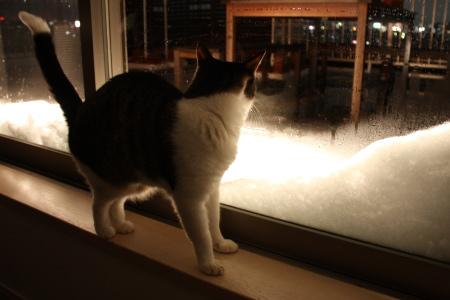 雪がとけてゆく・・・