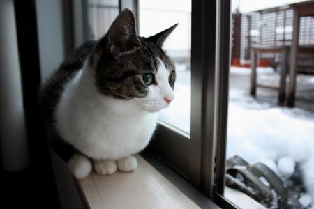 雪は降ってないとね~外出る気しないの