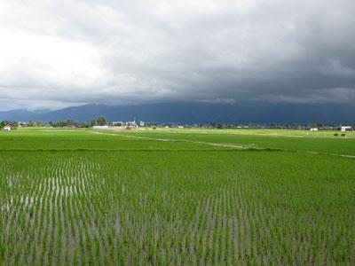 fukumitsu002