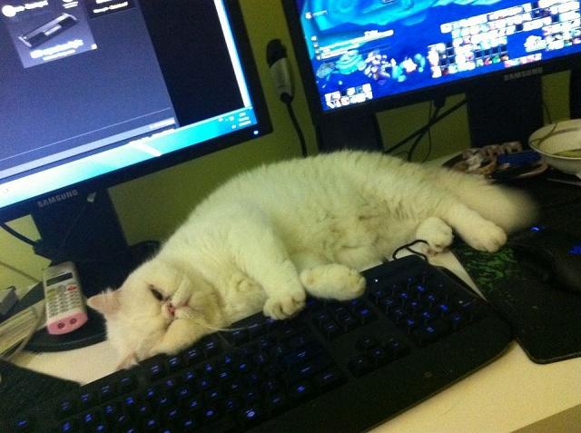 Desktop_Razer4_43.jpg