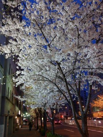 20130322_sakura.jpg