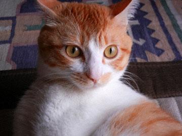 blog CP 24 Tom Cat_DSCN0114-8.11.12