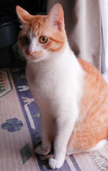 blog Tom Cat_DSCN0093-8.9.12