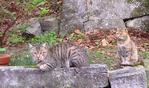 吾輩は石見猫である