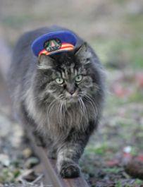 働く猫駅長、ばす