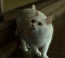 サミー先生が言うひこにゃん??という猫
