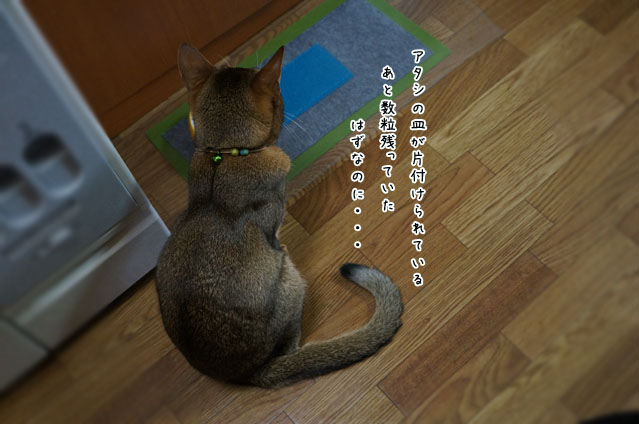 c04181.jpg